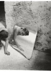 Francesca Woodman : On being an Angel