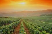 Champagne : Reims soutient la candidature à l'Unesco