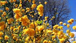 Le 20 mars : c'est le printemps !