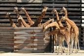 Du Parc zoologique au Musée Picasso, cinq nouveaux lieux à (re)découvrir à Paris