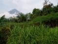 Mont Cameroun - Mont Cameroun